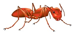 small_bug_ant
