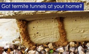 Termite Tunnels?