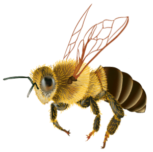 bee removal arizona