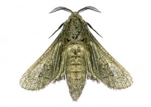 http://www.dreamstime.com/royalty-free-stock-photo-house-moth-isolated-white-background-image31825485