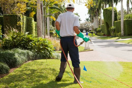 Treat your home for pests