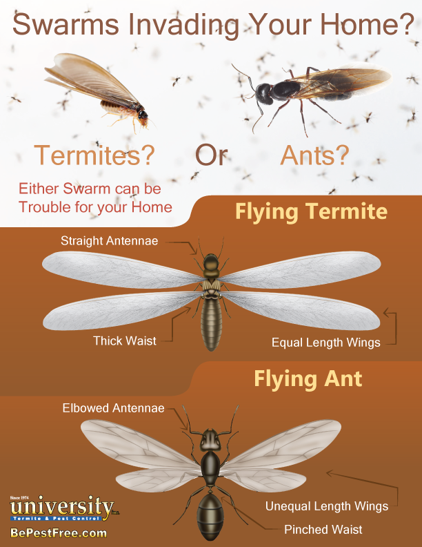 termite-or-ant-infographic (1)