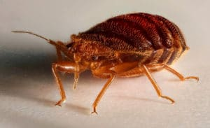 Bed Bugs – The One Hitchhiker Nobody Ever Wants To Pick Up