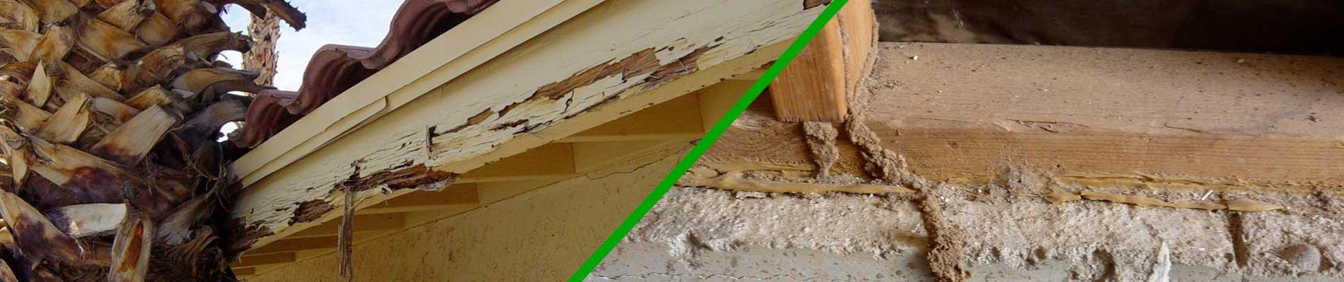 sierra-vista-termite