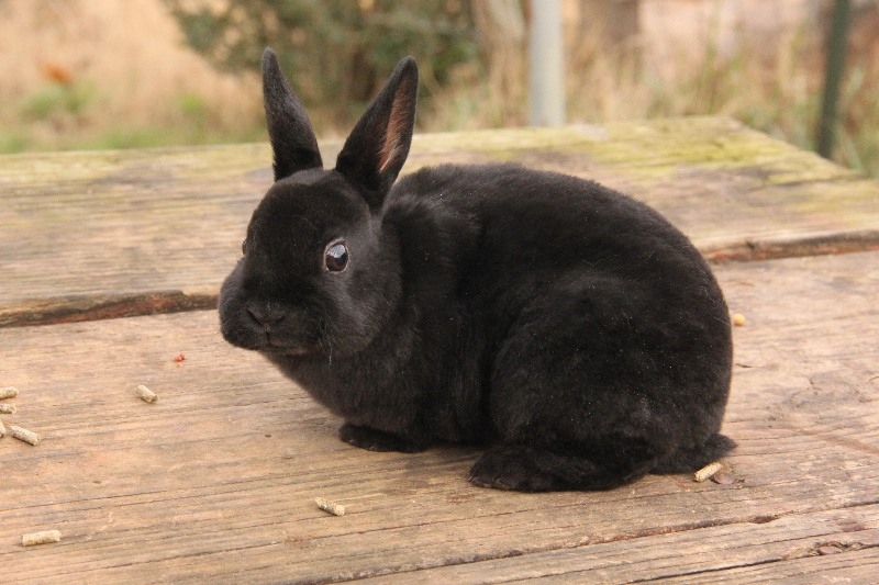 Adopt A Rescued Bunny