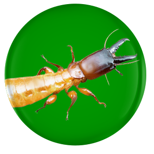 pest and termite control sierra vista