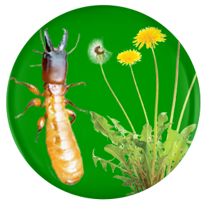 termite, weed and pest control nogales