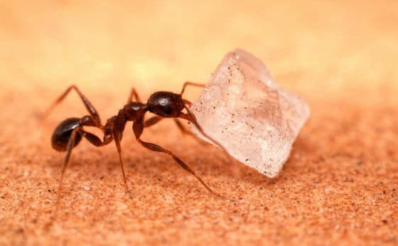 6 ways to get rid of sugar ants