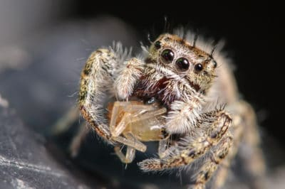 A Web of Symptoms: How to Tell if You've Been Bitten by a Dangerous Spider