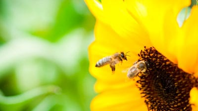 Tuscon's Busy Bees and Their Benefits