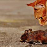 Five Arizona Pest Control Myths