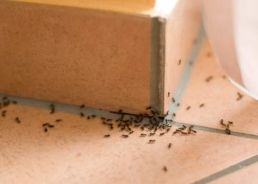4 Easy Ways To Rid Your Home Of Ants
