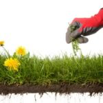 5 ways weed control can make your home pest free`