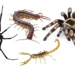 arizona spiders and scorpions