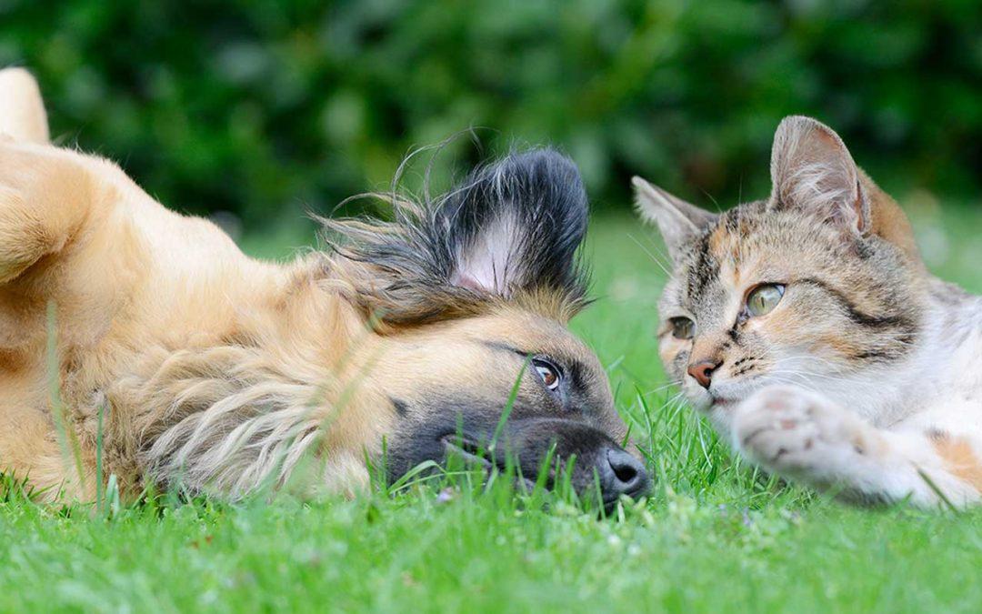 Pet-Friendly Pest Control Treatment