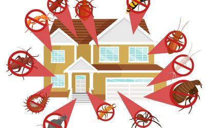Our Termite Control Process