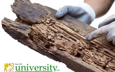 Addressing Your Termite Problem Head-On