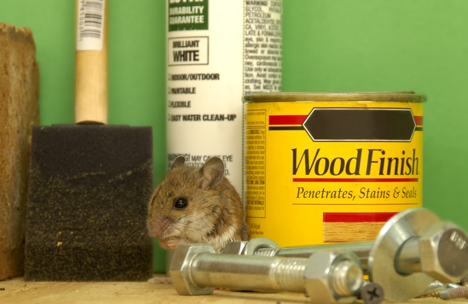 Pest-Proof Your Home in Arizona