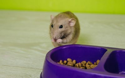 Pests like pet food: Four steps to fight back