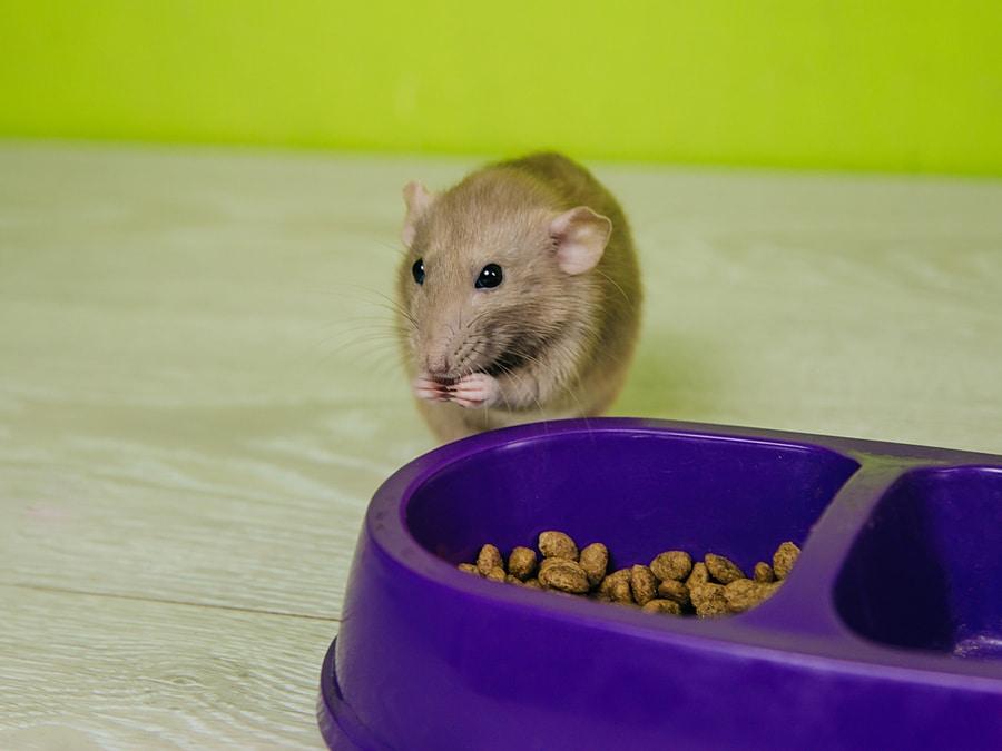 pests in pet food