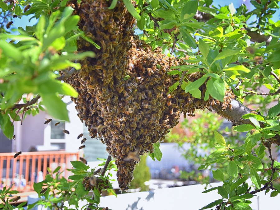Preventing Bee Infestations