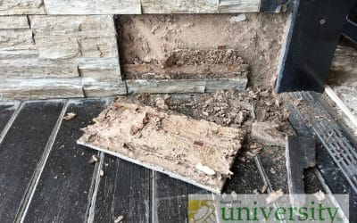 Tips on Termites in Arizona: What You Need to Know as a Homeowner